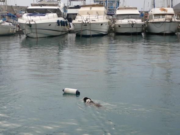 hond redt stootwil....