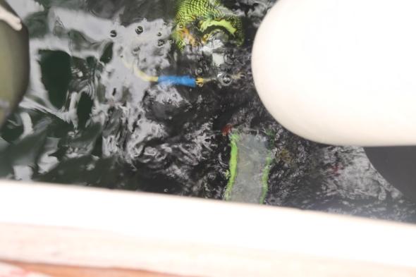 duiker maakt nog even het onderwaterschip schoon; geen overbodige