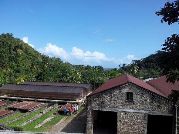 Belmont Estate waar cacaobonen worden verbouwd, gedroogd en geleverd aan de Organic Chocolate Factory