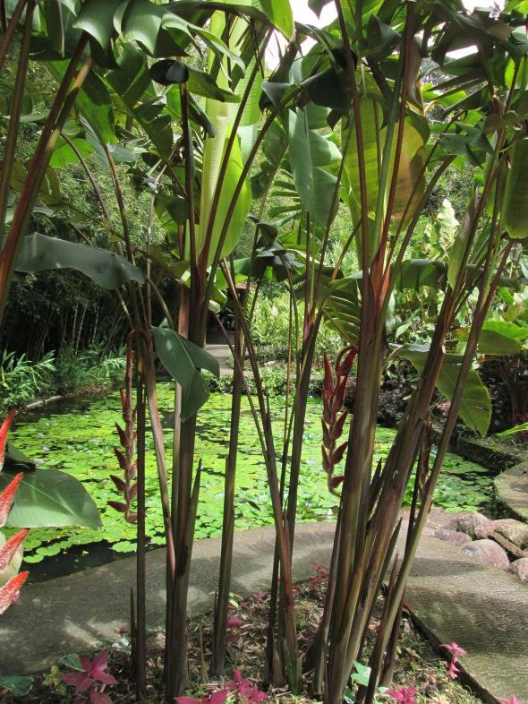 bijzondere palmen en planten in Balata