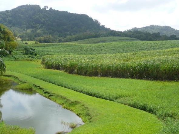 suikerriet plantage op  Clement