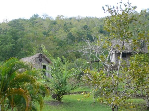 slavensavannah (museaal   park over het leven van de slaven en hun gebruik van kruiden en bomen om te bouwen en als medicijnen