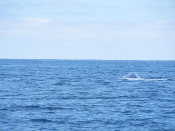 walvis vlakbij!