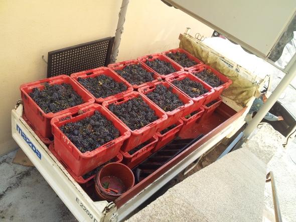 op de druiven natuurlijk...
