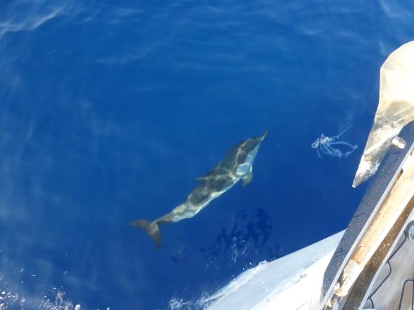 dolfijnen onderweg