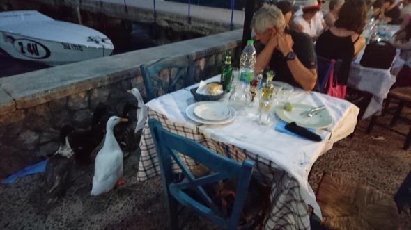 bij Margarita aan tafel, de eenden willen mee-eten!