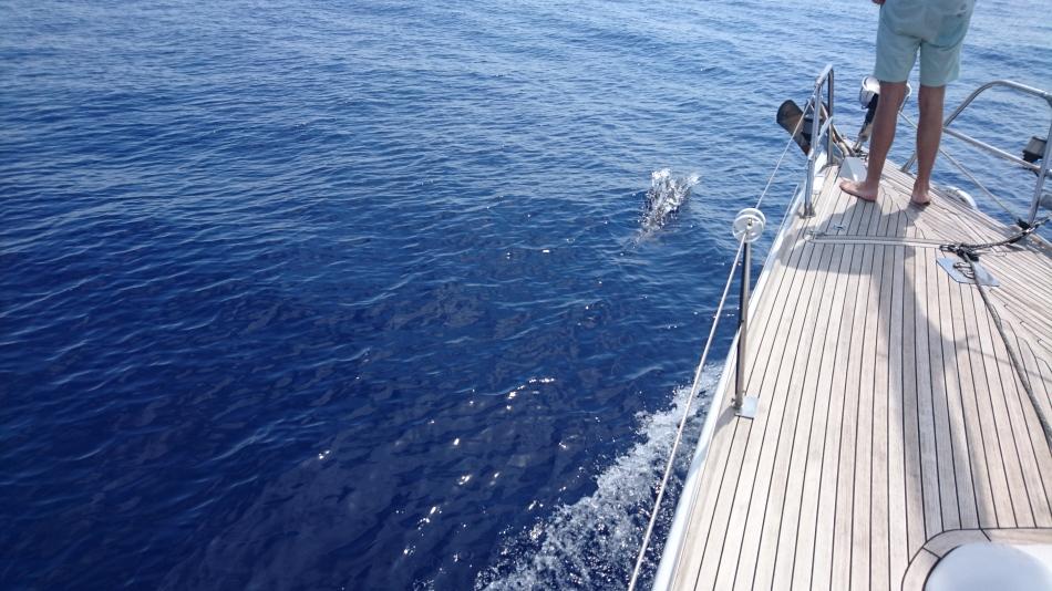dolfijnen onderweg naar Syracuse